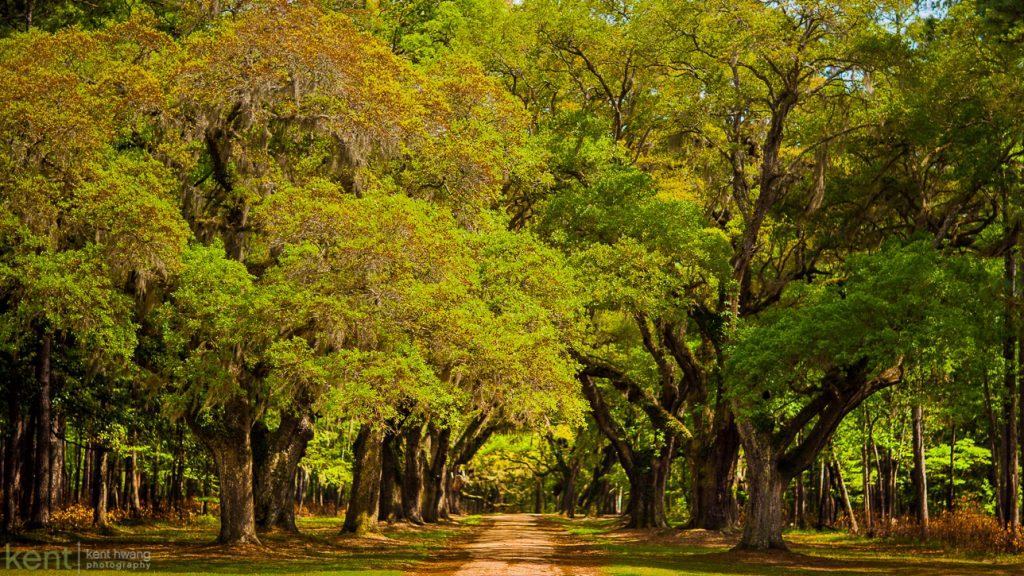 Somewhere in South Carolina . . .  © 2013 Kent S. Hwang